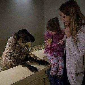 Борзая овца