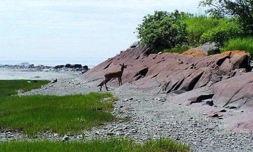 Quelle chance de voir de si près un chevreuil égaré, Parc Fontaine-Claire