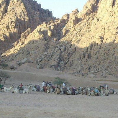 beduini. . deserto sharm ..