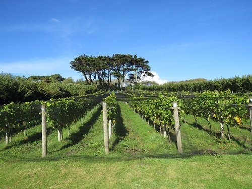 Holyvale Vineyard - a heavenly setting for a glass of wine