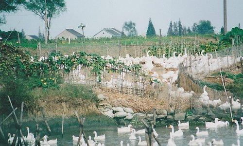 Tongli - on he outskirts of Suzhou
