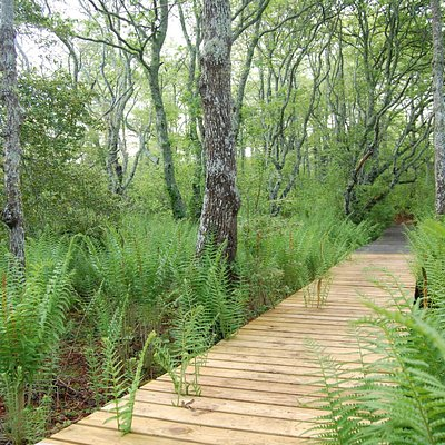 The Stump Swamp trail.