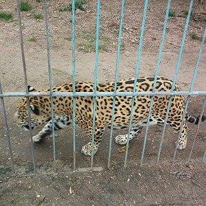 Zoológico Washington Rodriguez Piquinela