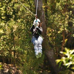 Canopy en el Bosque