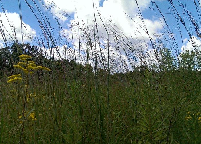 Prairie Field-Warren Co, IN