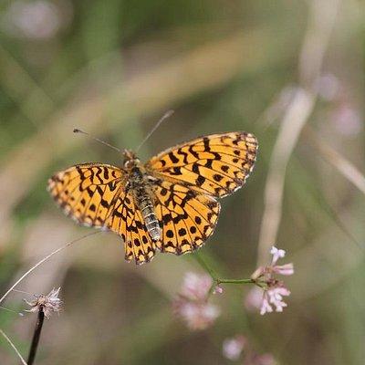 Farfalle (moltissime)