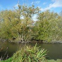 The eponymous pond