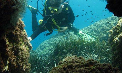 Una inmersión con Dive&Dive