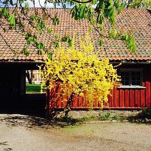 Nice yard at Voienvolden old farm