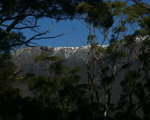 Snow on Mt Wellington from the Summit Loop.
