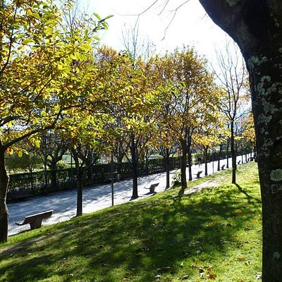 Covelo Park - Autumn - the promenade, with benches along each side and shaded by trees