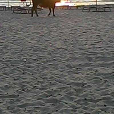 Durazzo in spiaggia con la natura