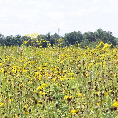 Meadow at Springfield Bog