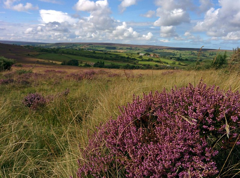 Glaisdale Moors with the heather
