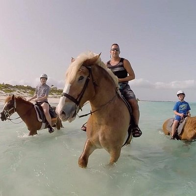 Horses love the water!