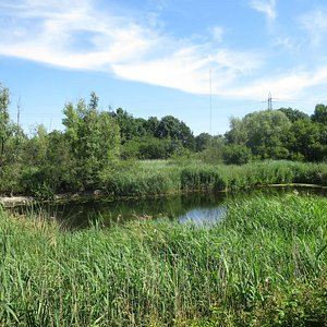 Scenery at WaterWorks Centre & Middlesex Filter Beds