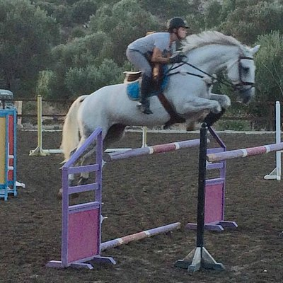 Showjumping training.