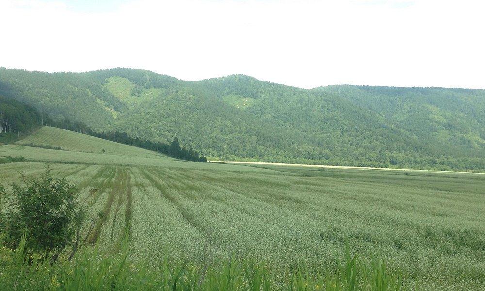 近辺の蕎麦畑の景色です。 奥の山の麓まで、蕎麦の白い花が咲いていました。(#^.^#)