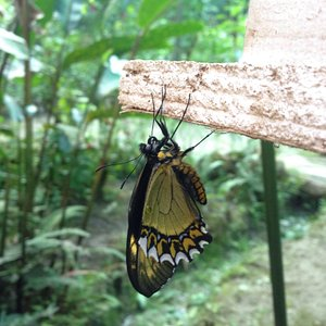 Aprendiendo acerca de las mariposas