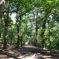 Woodland Paths