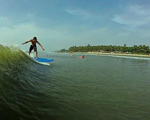 surf wala arambol goa
