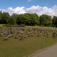 Fairlands Valley Geese