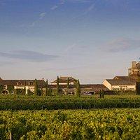 SHL vue des vignes - SHL from the vineyard