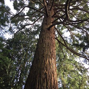 Arboretum Poortbulten