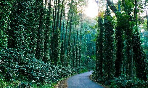 Explore the winding unknown roads in this small hill station through pepper and coffee estates