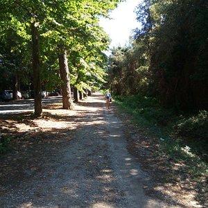 Sentiero della Lecciona- Viareggio