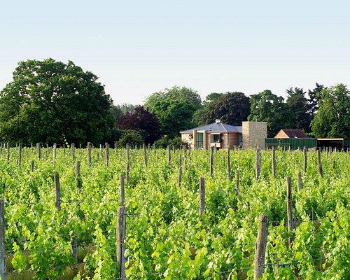 Summer view of vineyard