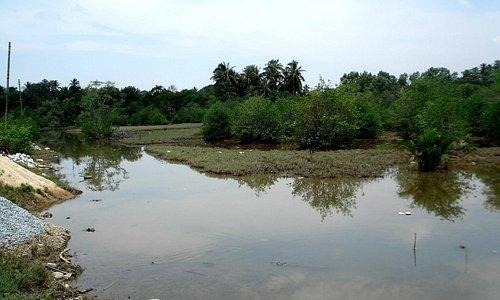 漁村の傍の川(船着き場)