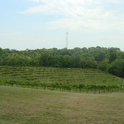 River Valley Winery vineyards