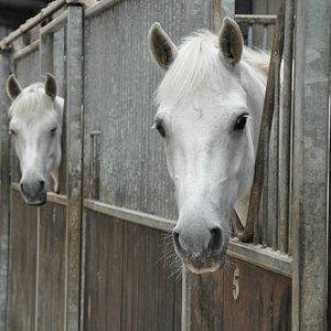 Stunning horses
