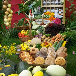 Maja's - Biodiverse organics
