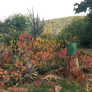 Aloes from all over the world in one place. Beautiful Aloe Gardens. Braai area if you come early