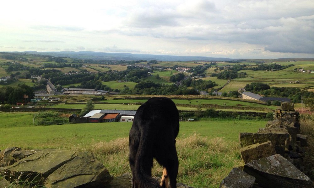 All taken up @haslingdenhalo Great walk out with the dogs and lovely viewpoints