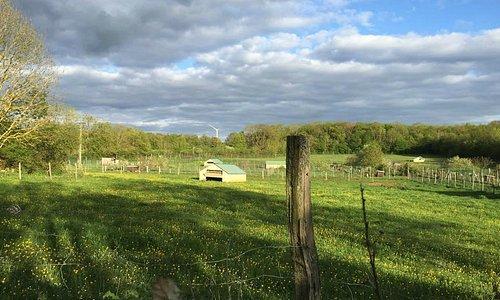 Le site de l'élevage 2015 autour de la ferme