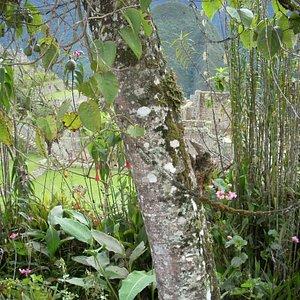 Otras de la especies de este jardín botánico