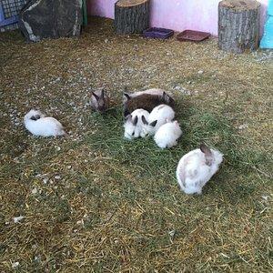 Крольчата бегут к людям в надежде на угощение
