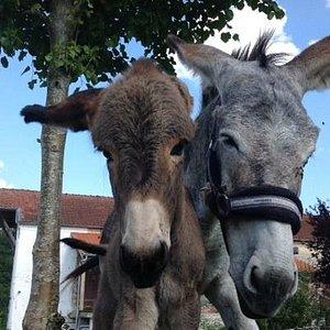 Balade en âne Belgique