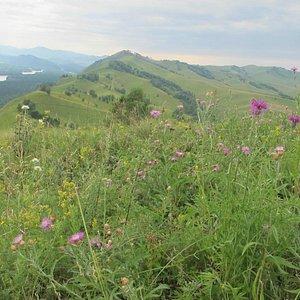 травы на горе