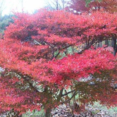 紅葉が綺麗でした。