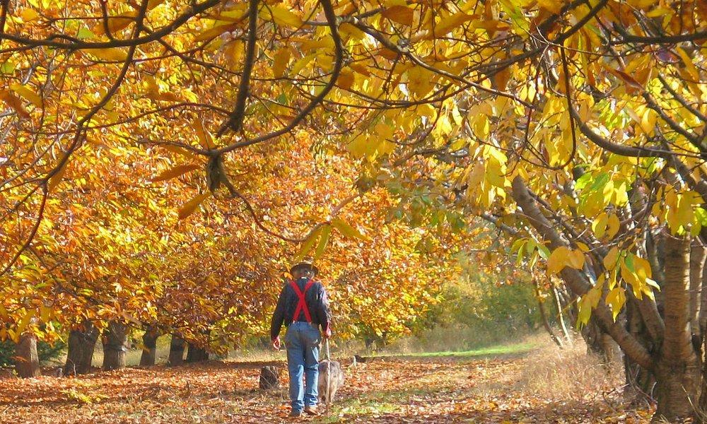 Fall in Camino