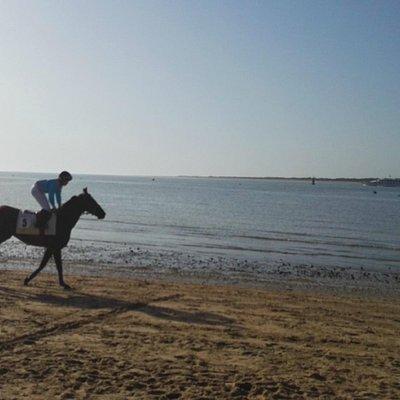 caballo sanlúcar
