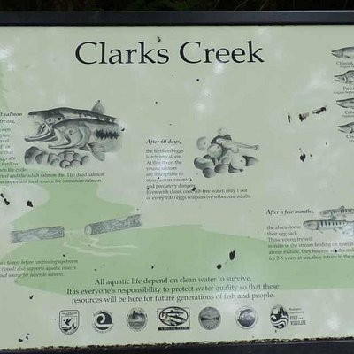 A trail sign on the path to Clark's Creek, showing the types of salmon that head up the creek in