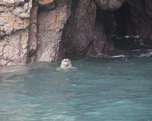Seal fun