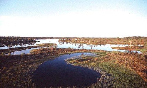 Swamp at Reinon Tupa