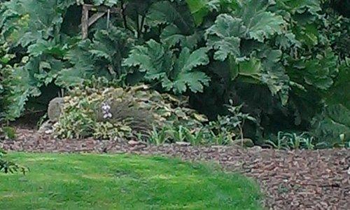 Prachtige manshoge struik in tuin