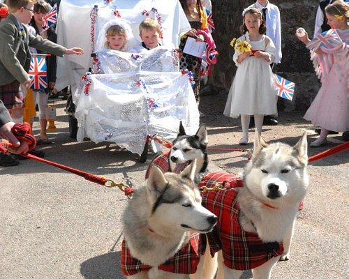 Childrens re-enactment of Royal wedding in Drumlithie.  Carriage pulled by Huskies